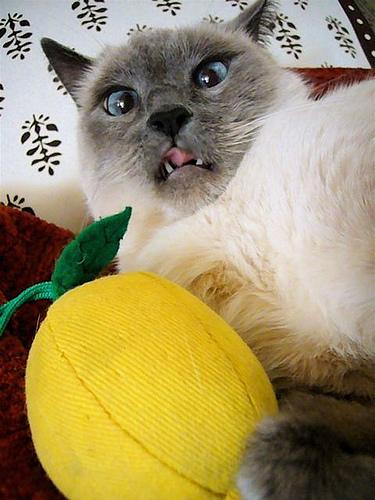 what?!?! - Flickr image credit dizznbonn