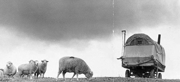 basque wagon resized 600